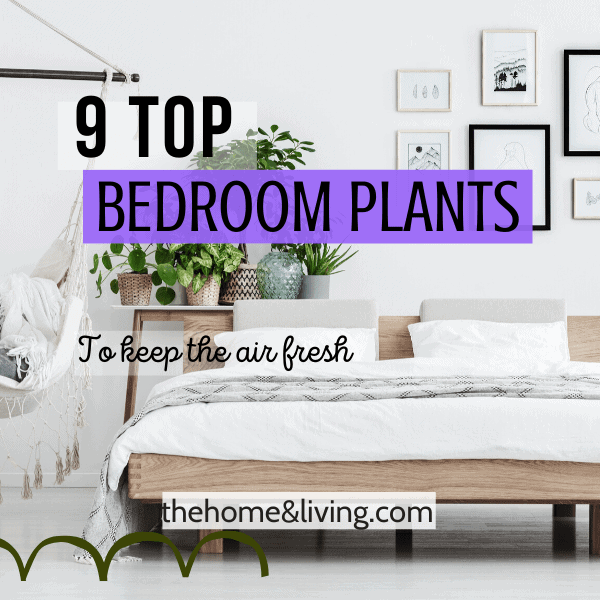 9 Top Bedroom Plants for a Healthy & Lively Room
