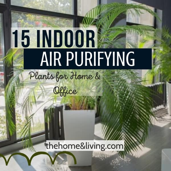 Air Purifying Plants: 15 Indoor Plants that Clean the Air and Remove Toxins
