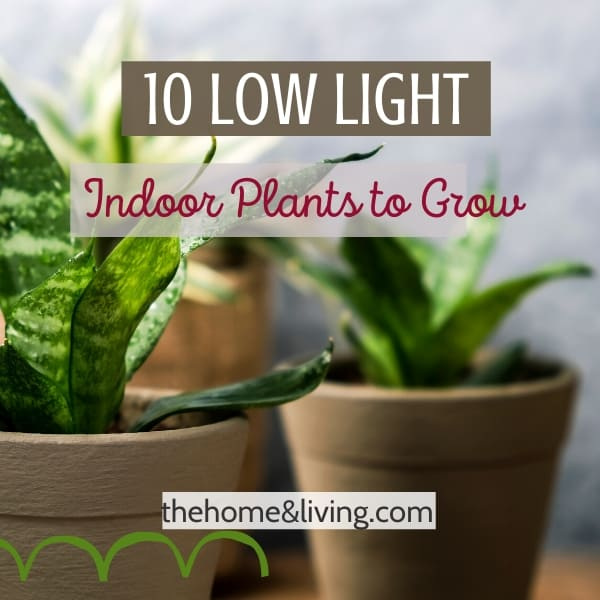 10 Low Light Indoor Plants that you can Grow